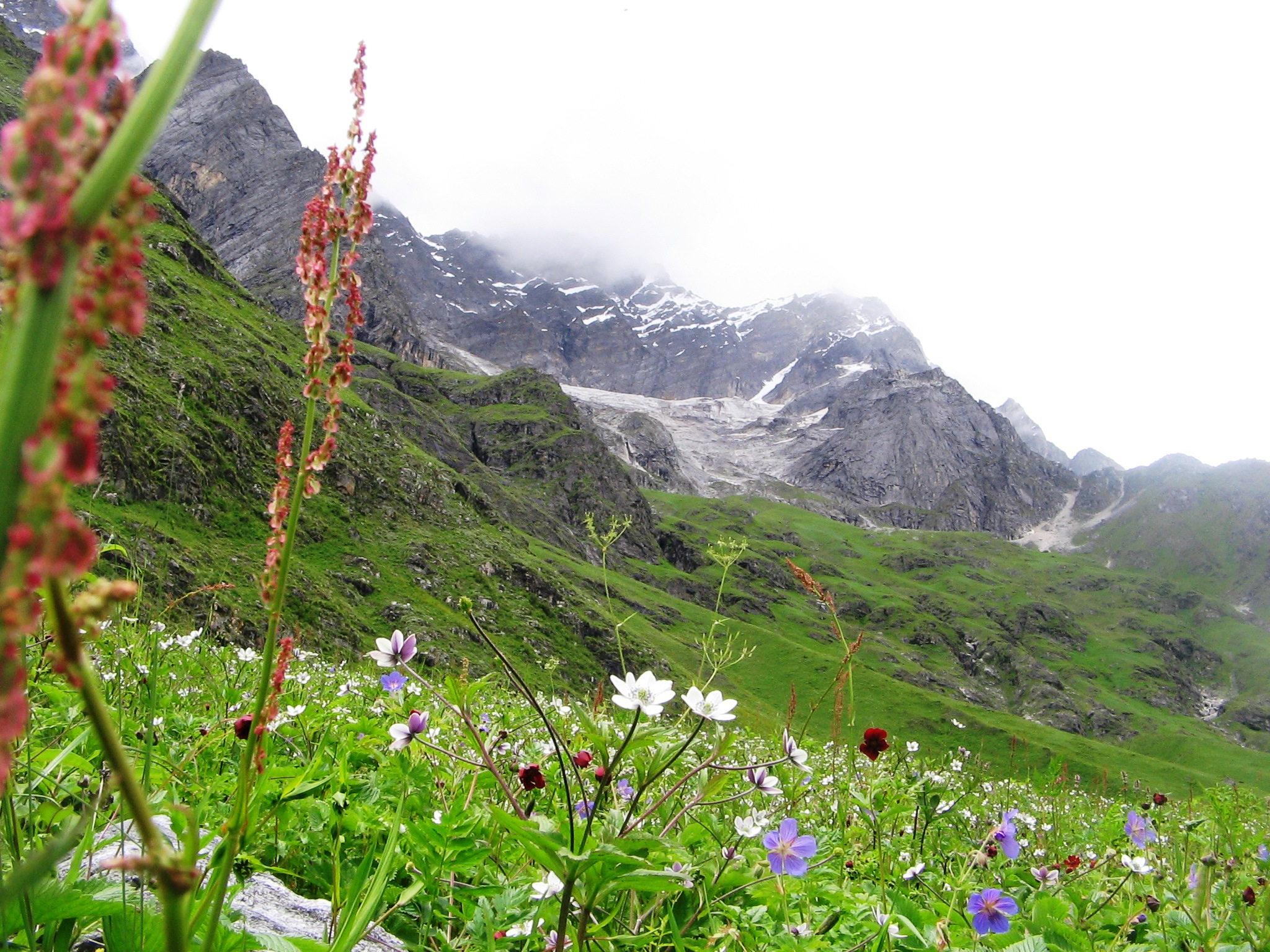 The Valley of Flowers, Himalaya, India. Photo by Dr. Rajeshwari Singh.