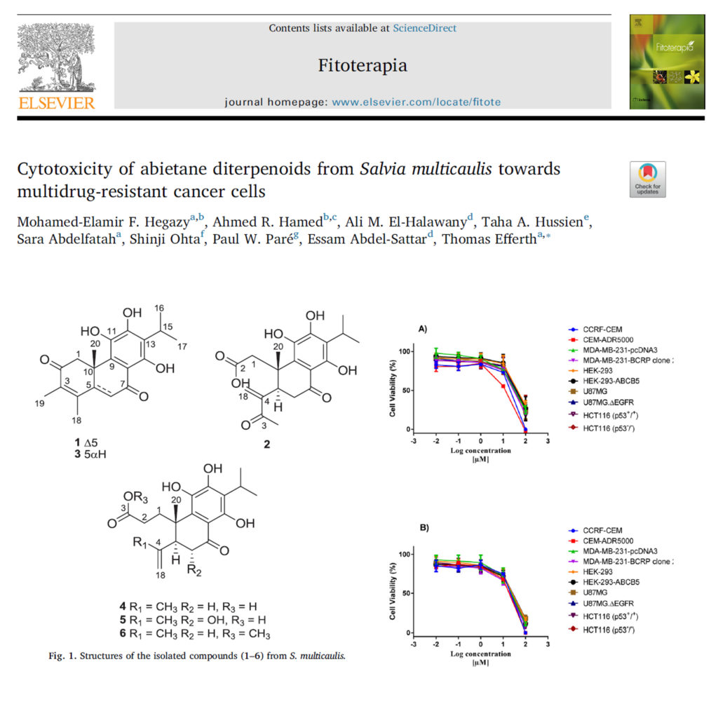 Cytotoxicity of abietane diterpenoids from Salvia multicaulis towards multidrug-resistant cancer cells