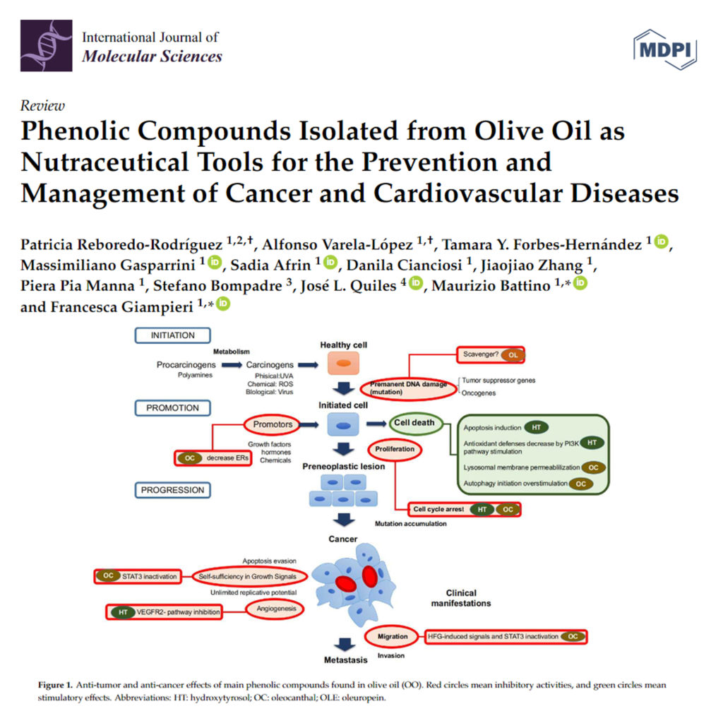 Phenolic Compounds Isolated from Olive Oil as Nutraceutical Tools for the Prevention and Management of Cancer and Cardiovascular Diseases