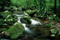 Tropical rainforest, Queensland, Australia. Photo by Dr. Rohan Davis.