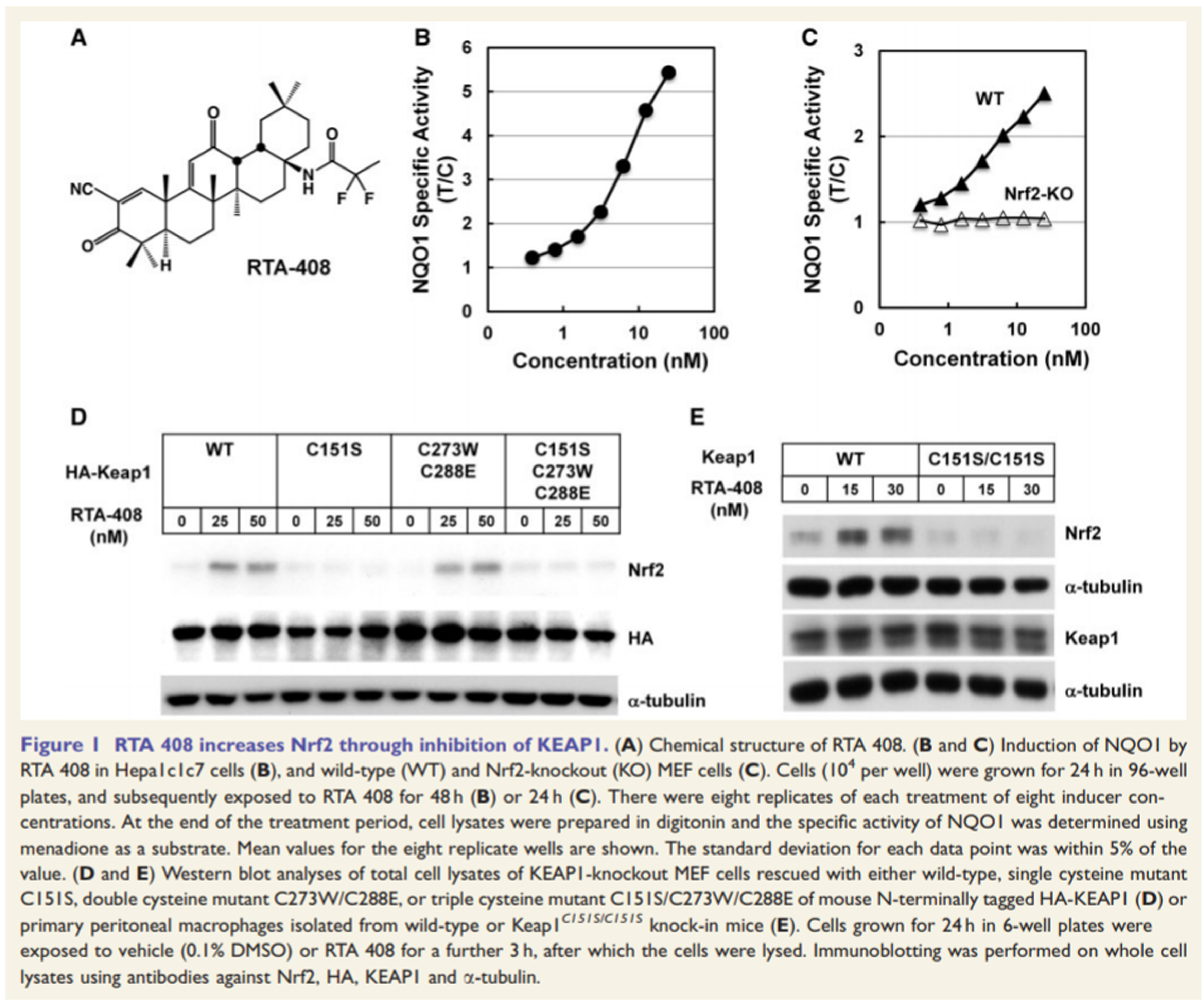 rta 408, status epilepticus, KEAP1 inhibition is neuroprotective and suppresses the development of epilepsy