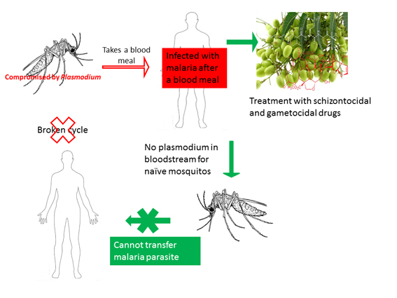 Malaria eradication The untapped natural products goldmine