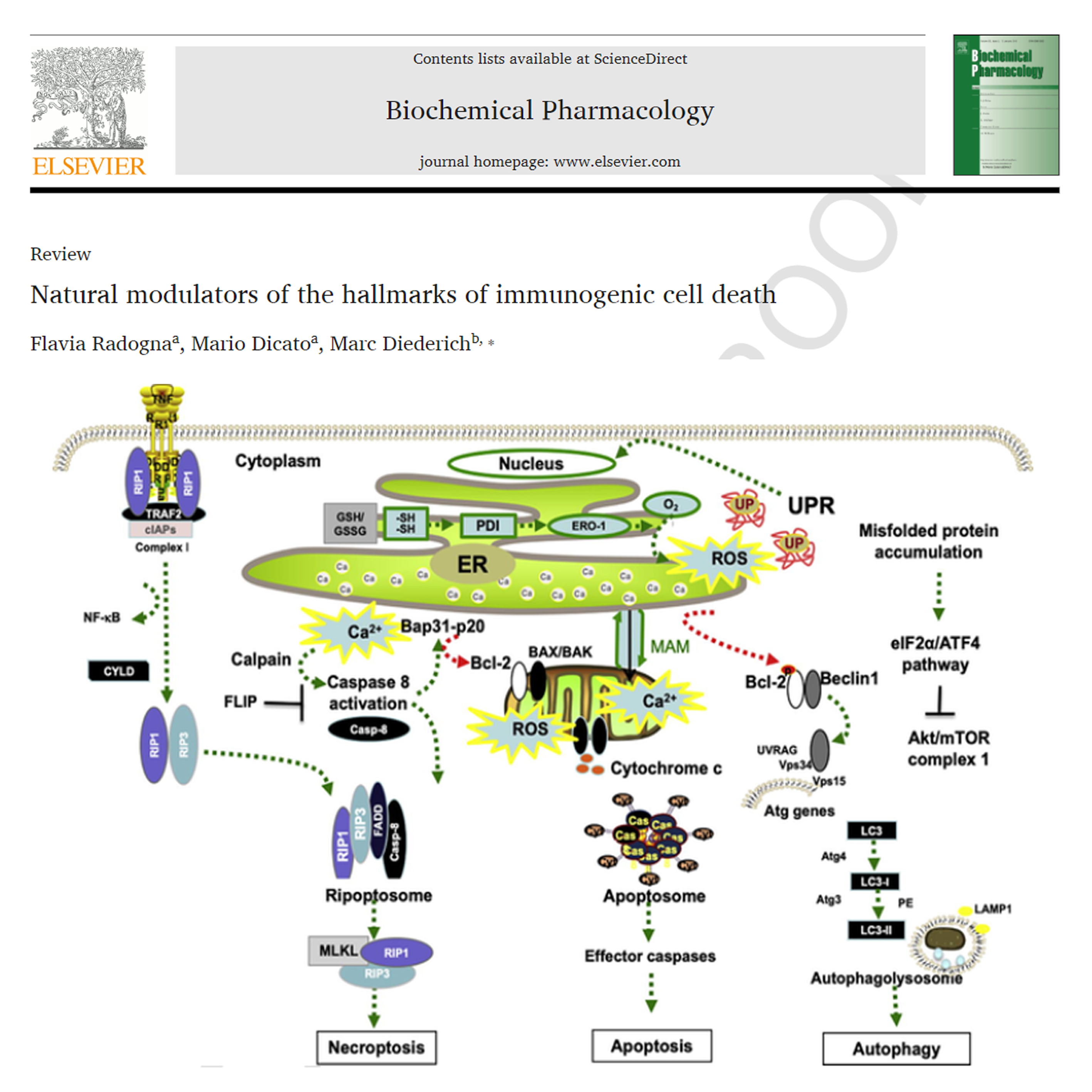 Natural modulators of the hallmarks of immunogenic cell death