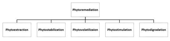 Figure 1: Mechanism of Phytoremediation